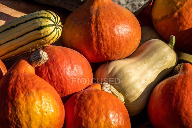 Close-up view of a pumpkin harvest in heap - foto de stock