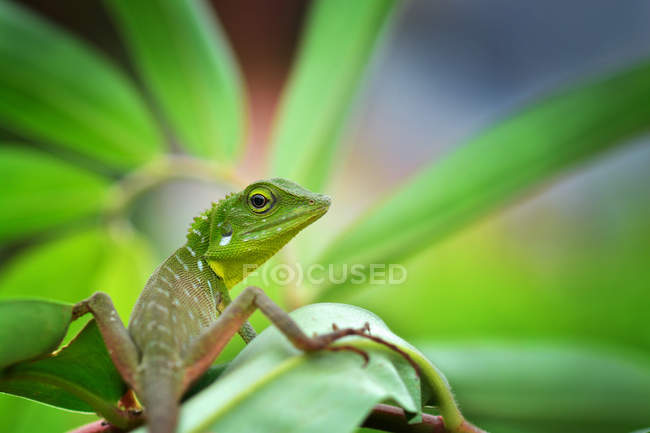 Small Lizard on a plant, closeup view, selective focus — Stock Photo