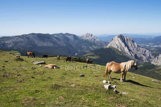 Cavalli selvatici al pascolo in montagna, Spagna — Foto stock