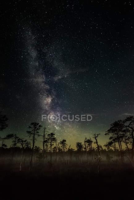 Vista panorámica de la Vía Láctea sobre un bosque, Lituania - foto de stock