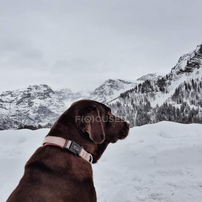 Собака сидит в снегу в горах, Браунвальд, Гларус, Швейцария — стоковое фото