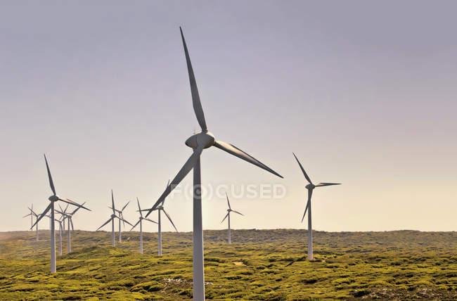 Вітряні турбіни на вітрофермі, Олбані, Західна Австралія, Австралія — стокове фото