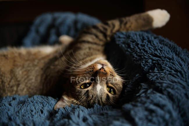 Close-up shot of cute cat lying on sofa — Stock Photo