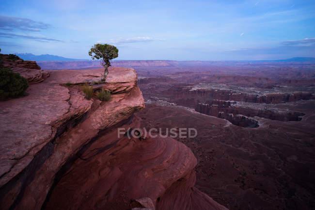 Panoramablick auf den Lone-Baum, Monument Basin, Grandview Point Trail, Utah, Amerika, Usa — Stockfoto