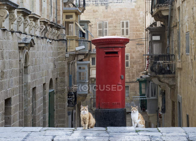 Two cats sitting in front of a letterbox, Valletta, Malta — стокове фото
