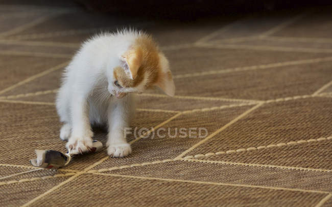 Kitten playing with a homemade toy, close seup view — стоковое фото