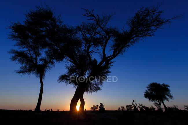 Vista panorâmica da silhueta de árvores no deserto, Arábia Saudita — Fotografia de Stock