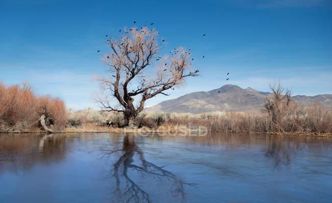 Vista panorámica de pájaros negros anidan en un viejo árbol muerto frente a un vertedero natural en el río - foto de stock