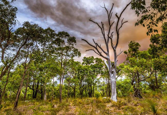 Vue panoramique du feu de brousse dans les collines de Perth, Australie occidentale, Australie — Photo de stock