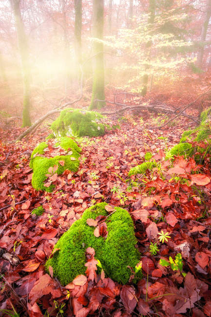 Scenic view of Autumn forest, Switzerland — Stock Photo