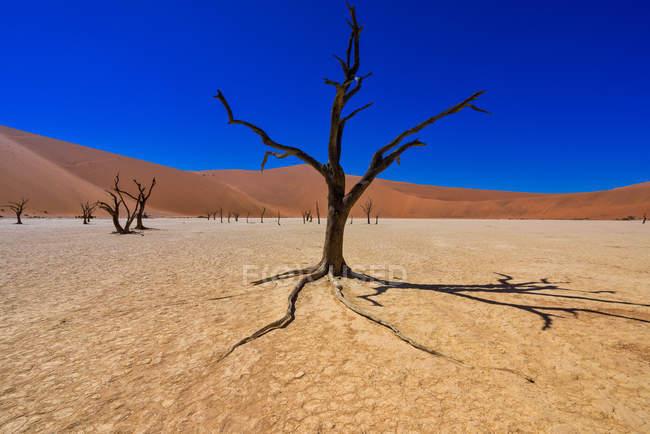 Живописный вид на песчаные дюны в пустыне, Deadvlei, Намиб Naukluft Национальный парк, Намибия — стоковое фото
