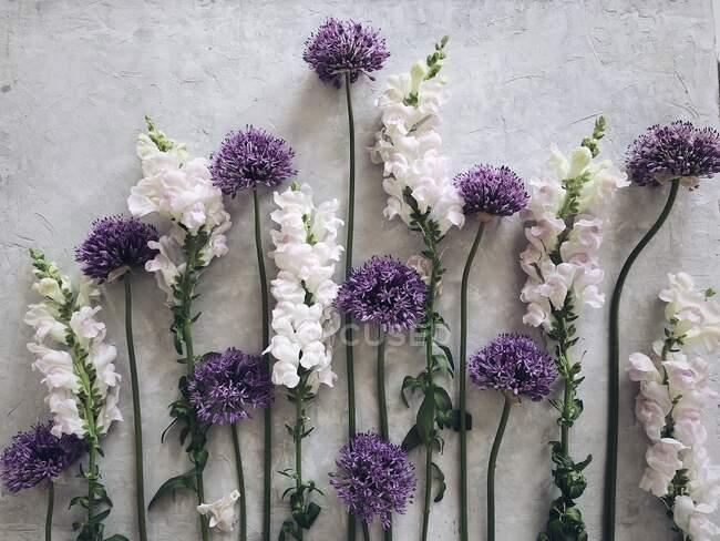 Цветы Алиума и снепдракона на сером фоне — стоковое фото