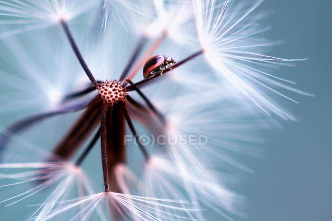 Божа корівка на квітку, селективна фокус макро постріл — стокове фото