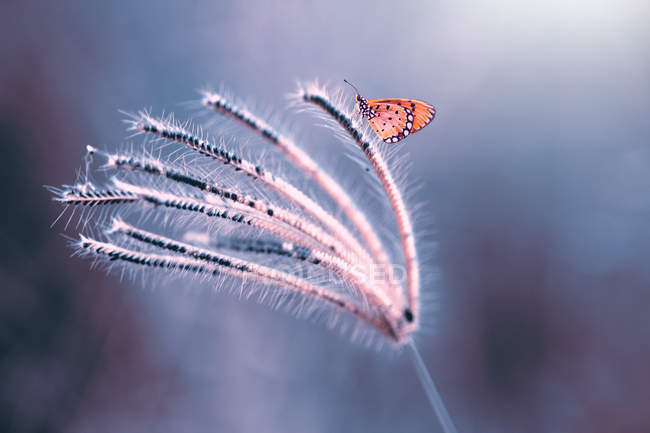 Butterfly on a flower against blurred background — Stock Photo
