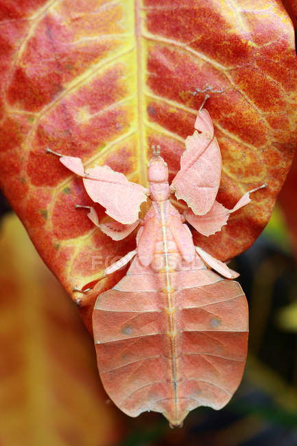 Вид крупным планом насекомого на листе — стоковое фото