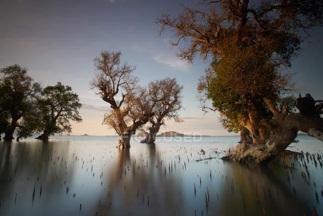 Vue panoramique sur les mangroves, Pototano, Sumbawa, West Nusa Tenggara, Indonésie — Photo de stock