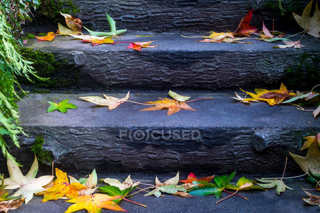 Closeup view of Autumn leaves on stairs in a park — Stock Photo