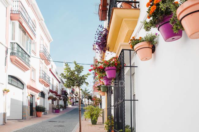 Hermosas flores en macetas en la ciudad de barcelona - foto de stock