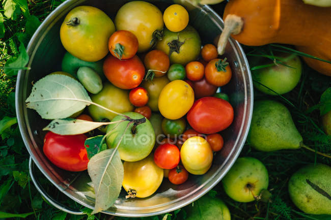 Fresh organic fruit and vegetables in the garden — Stock Photo