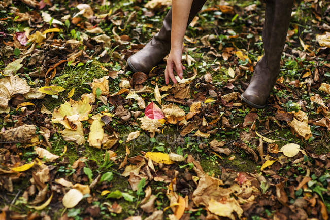 Girl bending down picking up autumn leaves — Stock Photo