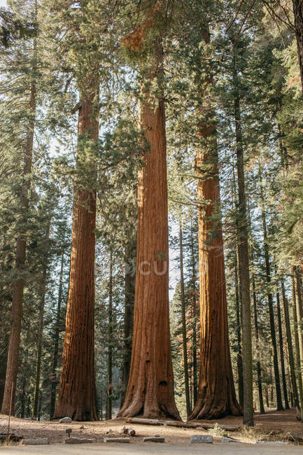 Scenic view of Sequoia National Park, California, America, USA — Stock Photo