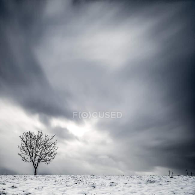 Мальовничий вид на самотній дерево в зимовий пейзаж — стокове фото