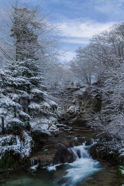 Живописный вид на реку, протекающей через лес, Швейцария — стоковое фото