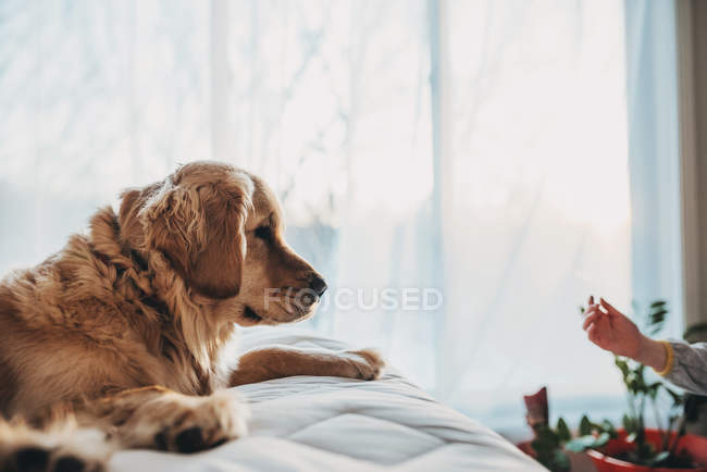 Cute dog at home looking at childarm — Stock Photo