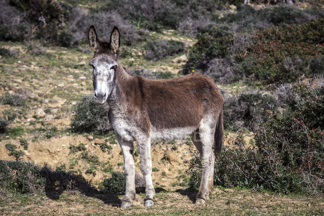 Scenic view of Donkey standing in a field, Strait Natural Park, Tarifa, Cadiz, Andalucia, Spain — Stock Photo