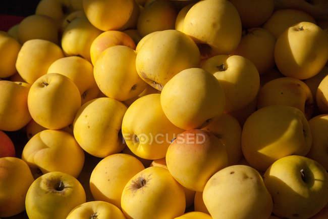 Крупный рост стопки желтых яблок на рынке — стоковое фото
