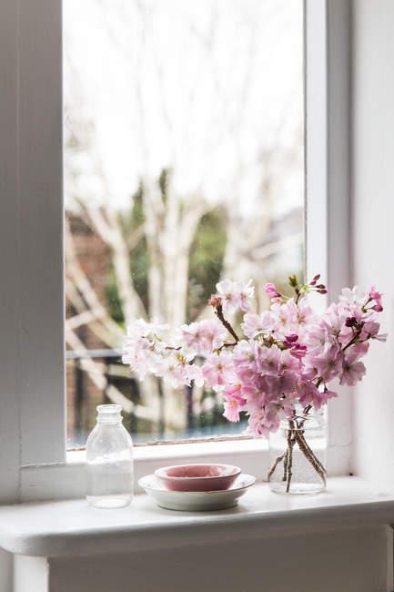 Квіти вишневого цвіту на підвіконні. — стокове фото