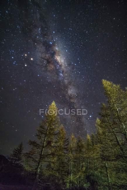 Vía Láctea sobre Parque con árboles - foto de stock