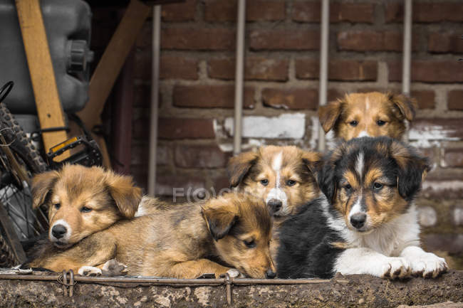 Close-up view of a five puppies in the street — Stock Photo
