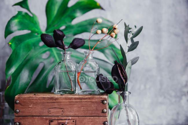 Rustikale Holzkiste mit Glasvasen und Pflanzen — Stockfoto