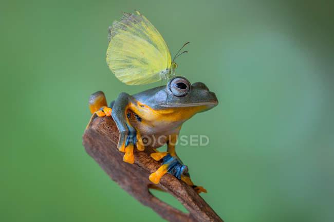 Retrato de una mariposa sobre una cabeza de rana, fondo borroso - foto de stock