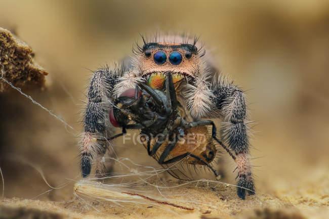 Aranha que come um inseto de encontro ao fundo borrado — Fotografia de Stock