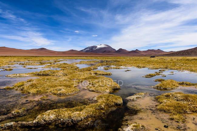 Водно-болотних угідь в пустелі, Сан-Педро-де-Атакама, Антофагаста, Чилі — стокове фото