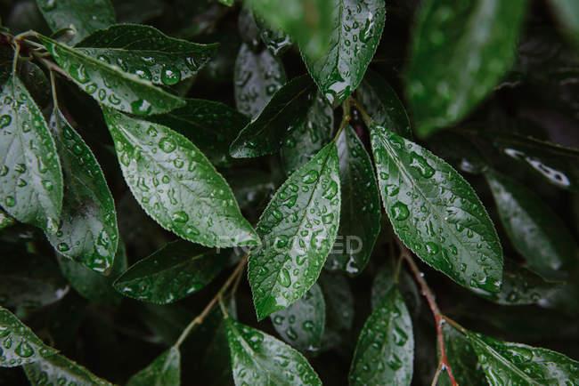 Vue rapprochée des feuilles humides avec des gouttes — Photo de stock