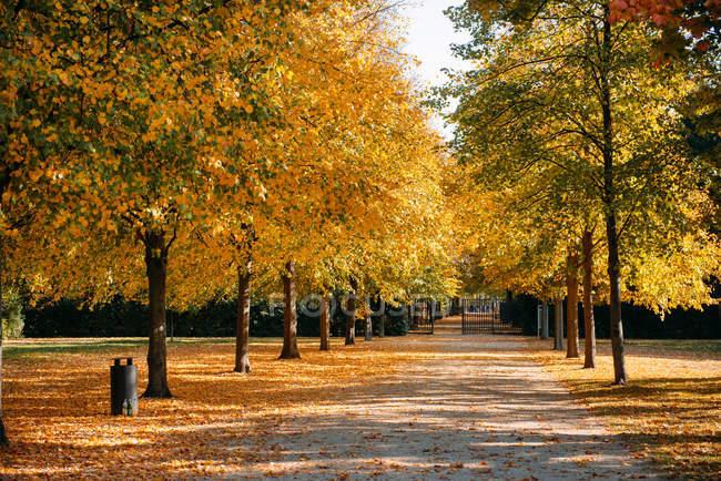 Treelined footpath in a park, Berlin, Germany — Stock Photo