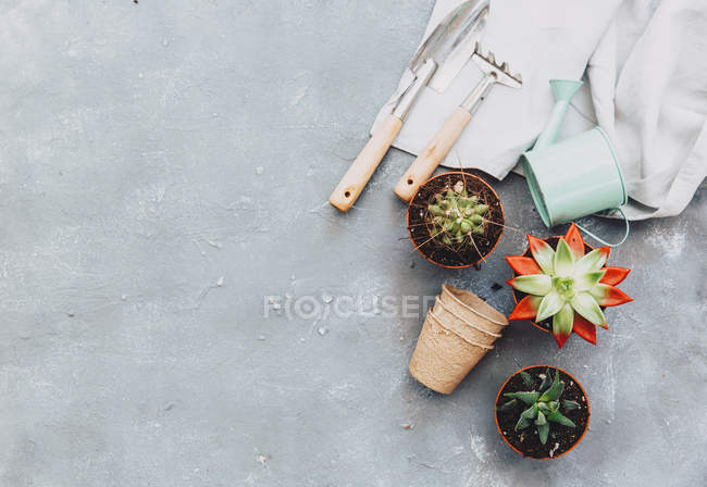 Closeup view of Potted plants and gardening tools — Stock Photo