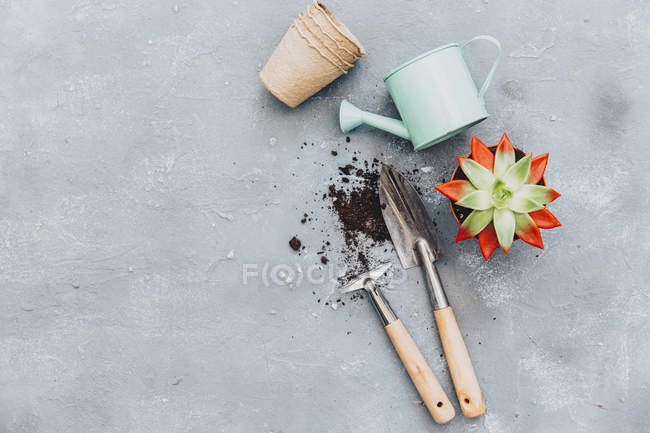 Cactus plant with gardening tools — Stock Photo