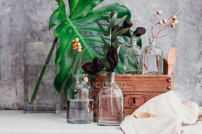 Ржавая деревянная коробка со стеклянными вазами и растениями — стоковое фото
