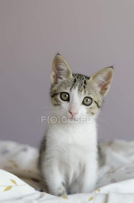 Portrait of a cat sitting on a quilt, closeup view — Stock Photo