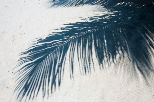 Shadow of palm tree leaf in the sand, Caribbean — Stock Photo