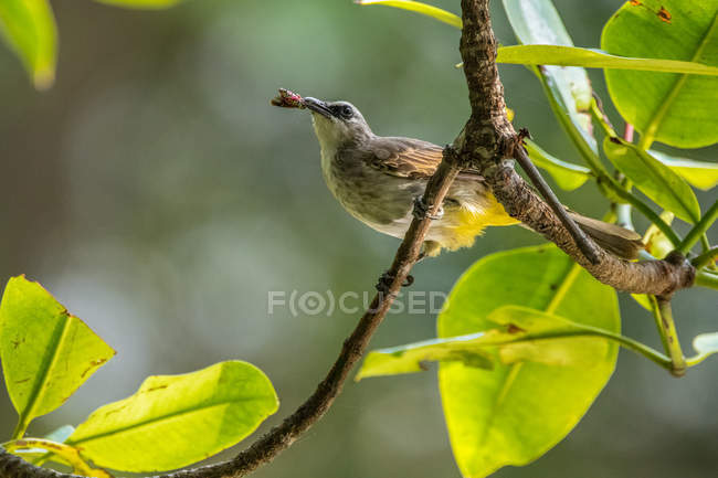 Bird sitting in a tree eating an insect, closeup view — Stock Photo
