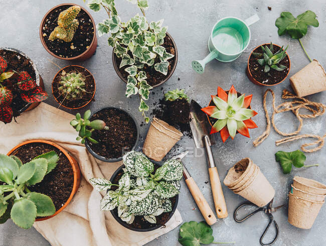 Closeup view of Cactus plants with gardening tools — Stock Photo