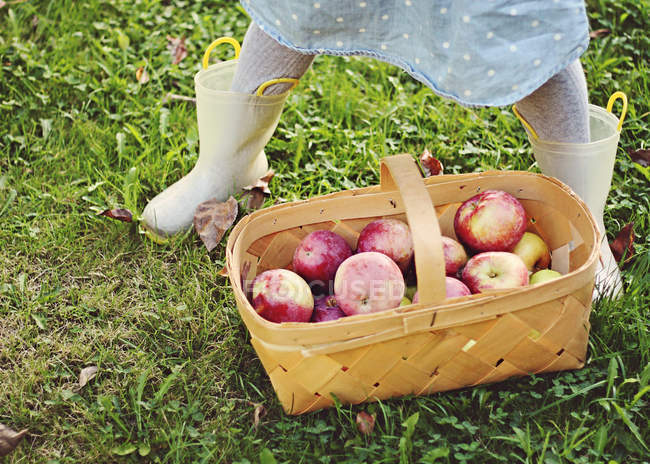 Girl legs standing next to a basket of freshly picked apples — Stock Photo
