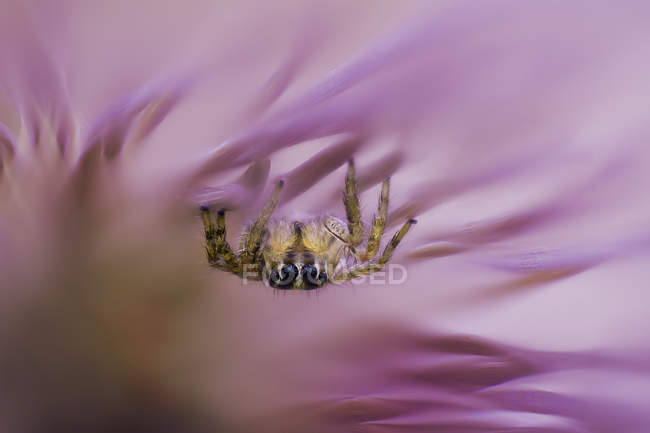 Close-up view of a spider on a pink flower petal, selective focus — Fotografia de Stock