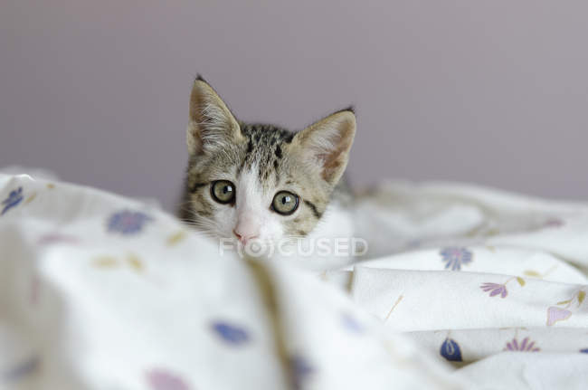 Cat sitting on a quilt, closeup view — Stock Photo