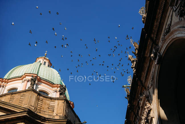 Scenic view of Flock of birds flying above a cathedral, Prague, Czech Republic — Stock Photo